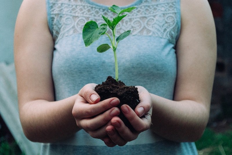 Is Cremation or Burial The More Eco-Friendly Option?